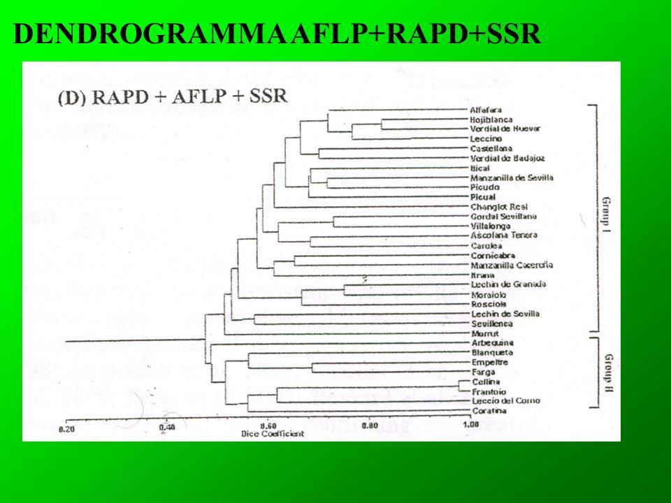 DENDROGRAMMA AFLP+RAPD+SSR