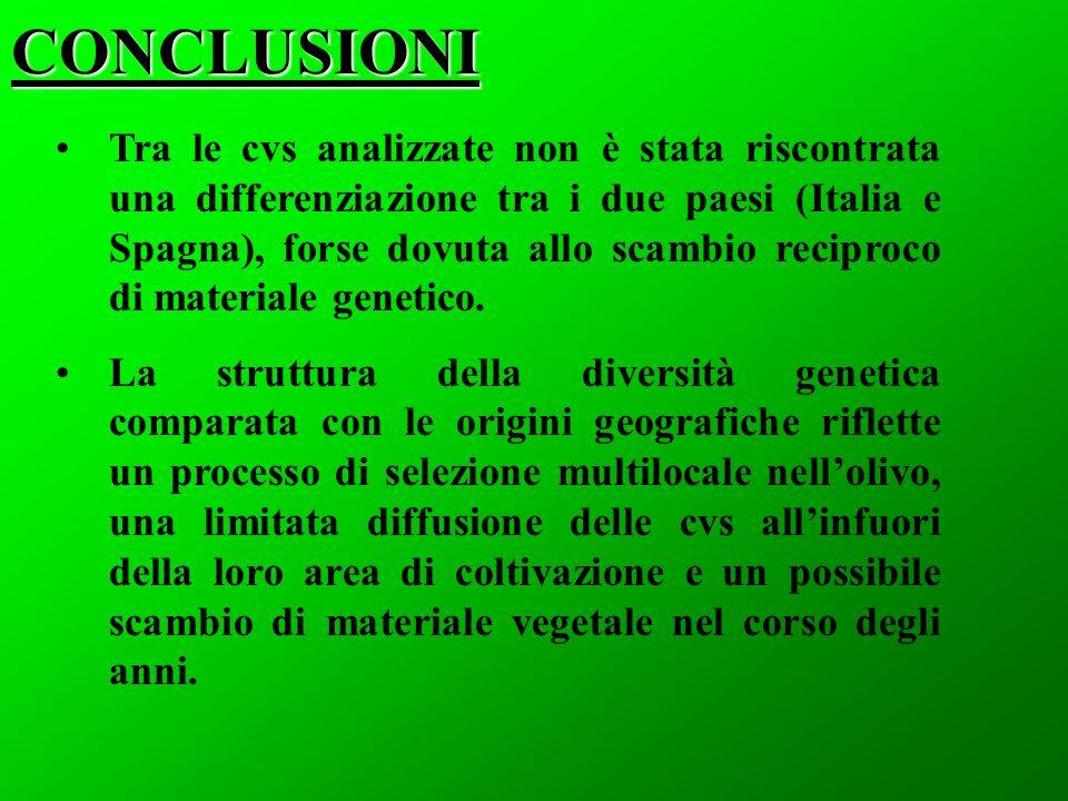 CONCLUSIONI Tra le cvs analizzate non è stata riscontrata una differenziazione tra i due paesi (Italia e Spagna), forse dovuta allo scambio reciproco di materiale genetico.