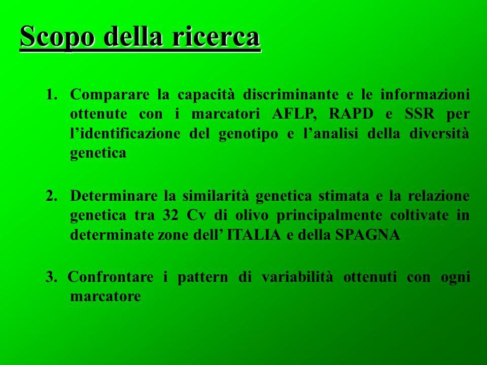 Scopo della ricerca 1.Comparare la capacità discriminante e le informazioni ottenute con i marcatori AFLP, RAPD e SSR per lidentificazione del genotip