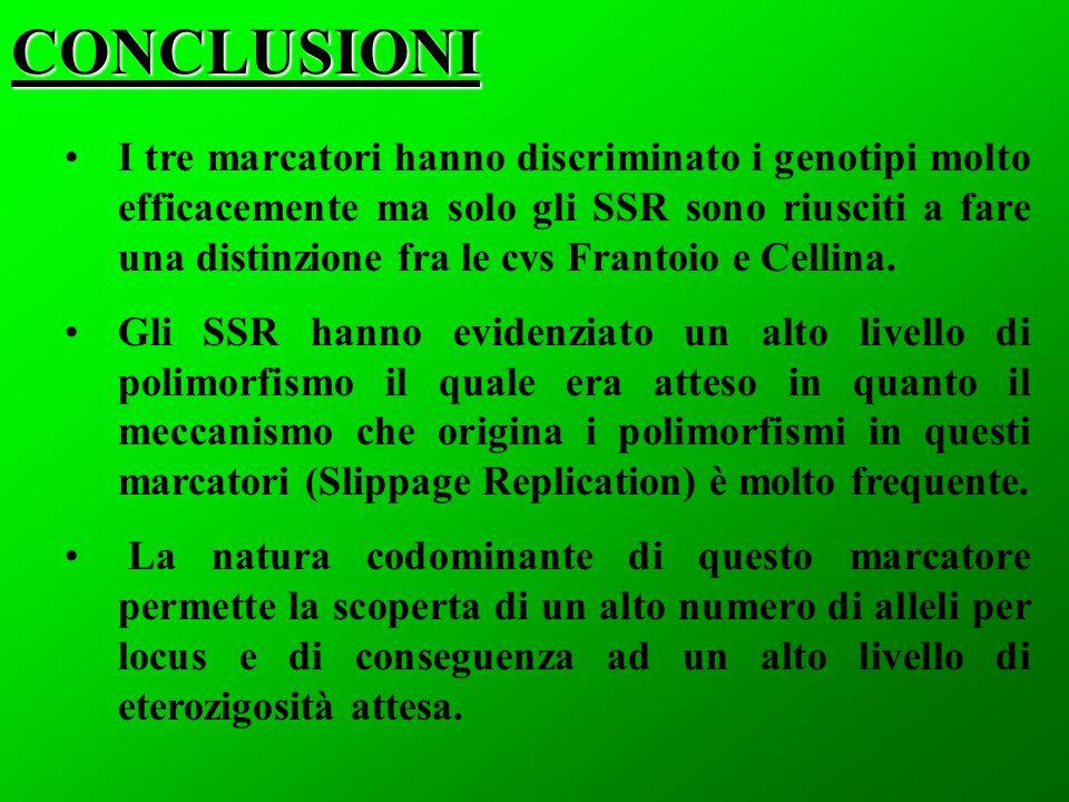 CONCLUSIONI I tre marcatori hanno discriminato i genotipi molto efficacemente ma solo gli SSR sono riusciti a fare una distinzione fra le cvs Frantoio e Cellina.