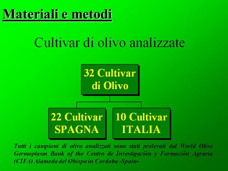 Materiali e metodi Tutti i campioni di olivo analizzati sono stati prelevati dal World Olive Germoplasm Bank of the Centro de Investigaciòn y Formaciòn Agraria (CIFA) Alameda del Obispo in Cordoba -Spain-