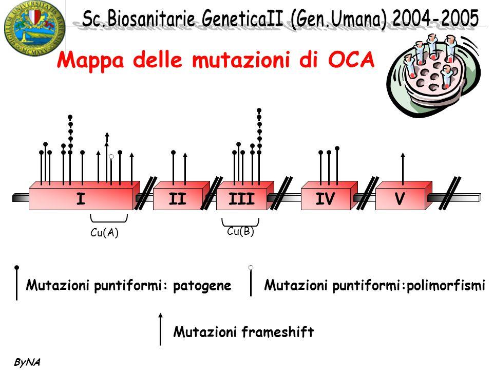 ByNA Mappa delle mutazioni di OCA IIIIIIIVV Cu(A) Cu(B) Mutazioni puntiformi: patogene Mutazioni puntiformi:polimorfismi Mutazioni frameshift