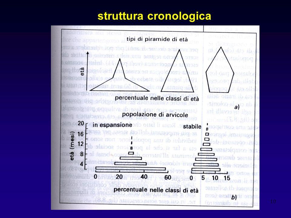 10 struttura cronologica
