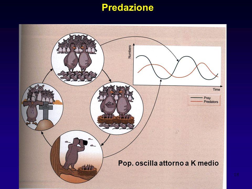 18 Predazione Pop. oscilla attorno a K medio