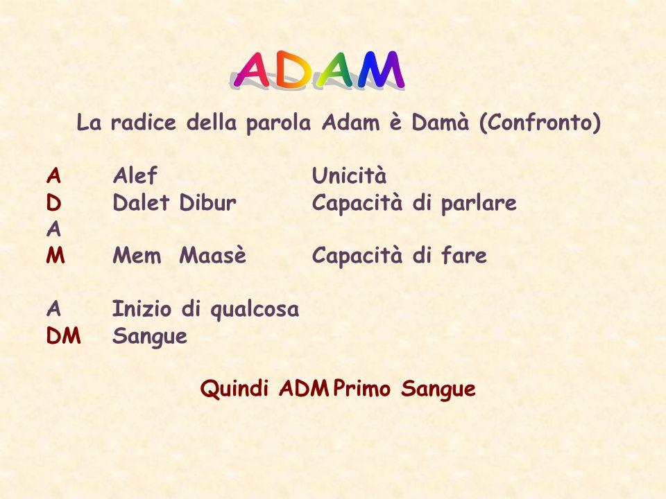 La radice della parola Adam è Damà (Confronto) AAlefUnicità DDaletDiburCapacità di parlare A MMemMaasèCapacità di fare AInizio di qualcosa DMSangue Quindi ADMPrimo Sangue