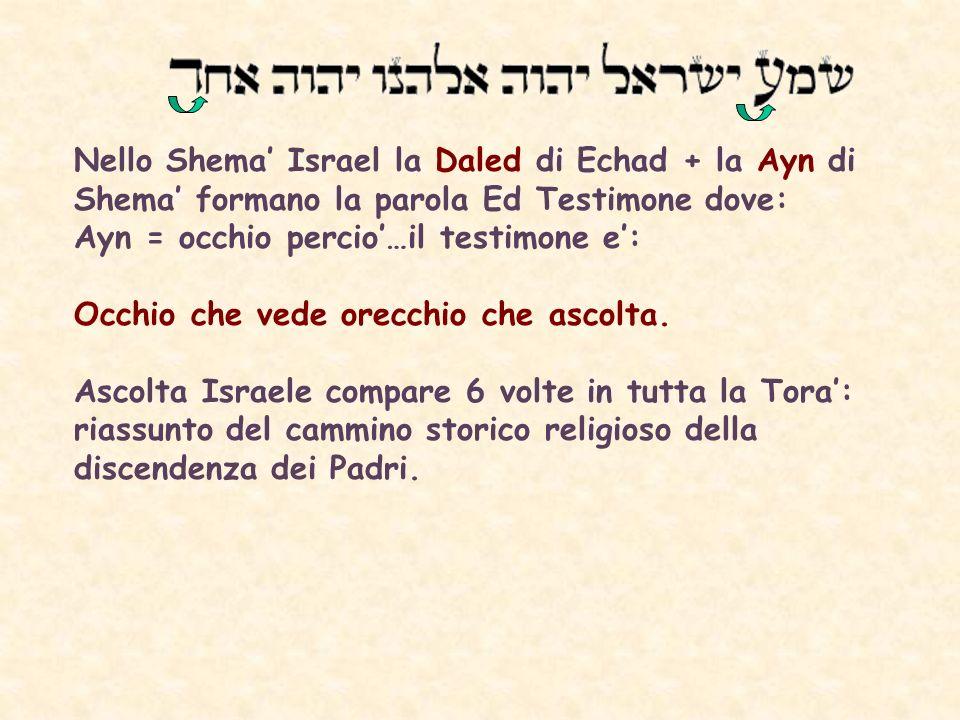 Nello Shema Israel la Daled di Echad + la Ayn di Shema formano la parola Ed Testimone dove: Ayn = occhio percio…il testimone e: Occhio che vede orecchio che ascolta.