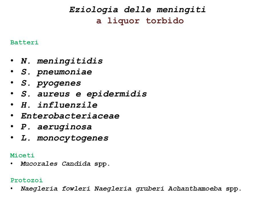 Eziologia delle meningiti a liquor torbido Batteri N. meningitidis S. pneumoniae S. pyogenes S. aureus e epidermidis H. influenzile Enterobacteriaceae