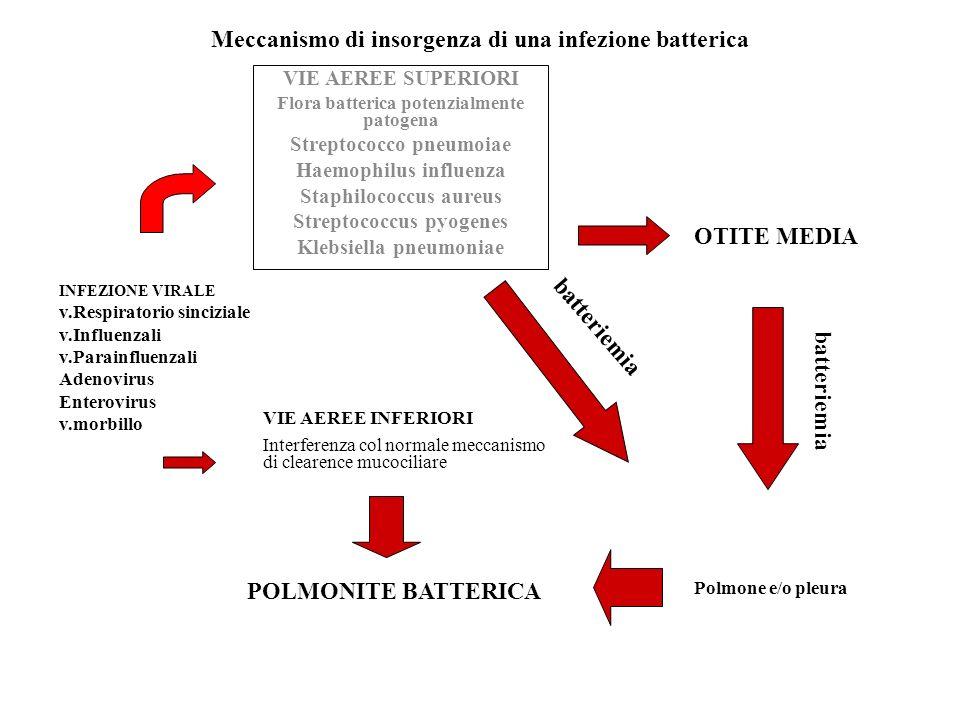 Meccanismo di insorgenza di una infezione batterica VIE AEREE SUPERIORI Flora batterica potenzialmente patogena Streptococco pneumoiae Haemophilus inf
