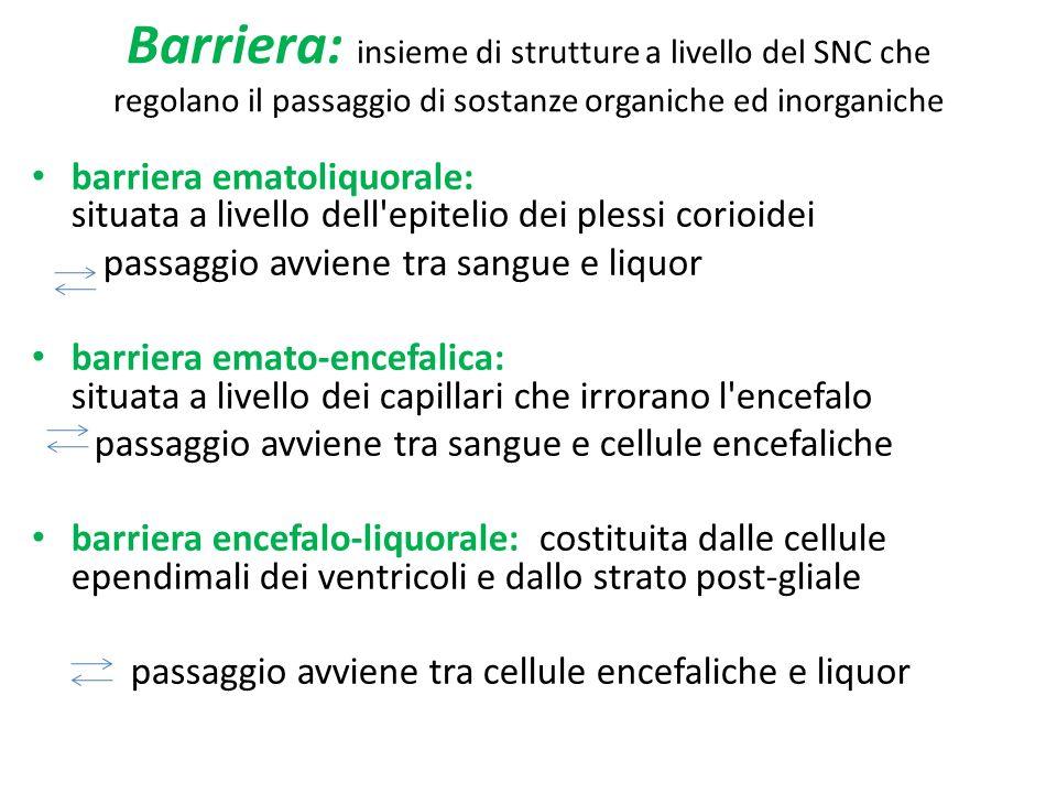 Barriera: insieme di strutture a livello del SNC che regolano il passaggio di sostanze organiche ed inorganiche barriera ematoliquorale: situata a liv