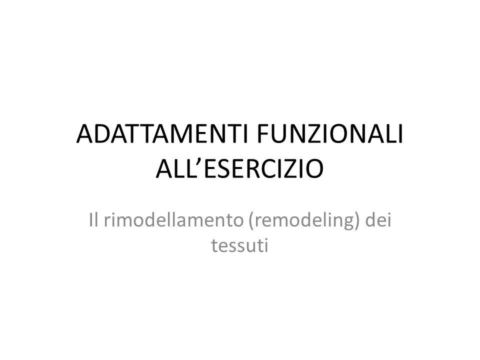 ADATTAMENTI FUNZIONALI ALLESERCIZIO Il rimodellamento (remodeling) dei tessuti