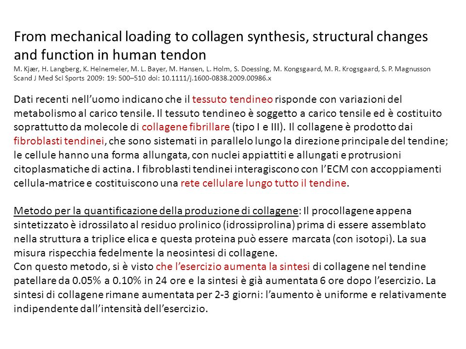From mechanical loading to collagen synthesis, structural changes and function in human tendon M. Kjær, H. Langberg, K. Heinemeier, M. L. Bayer, M. Ha