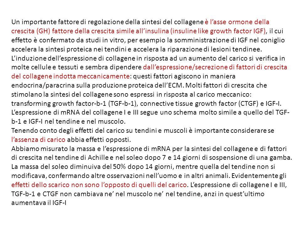 Un importante fattore di regolazione della sintesi del collagene è lasse ormone della crescita (GH) fattore della crescita simile allinsulina (insuline like growth factor IGF), il cui effetto è confermato da studi in vitro, per esempio la somministrazione di IGF nel coniglio accelera la sintesi proteica nei tendini e accelera la riparazione di lesioni tendinee.