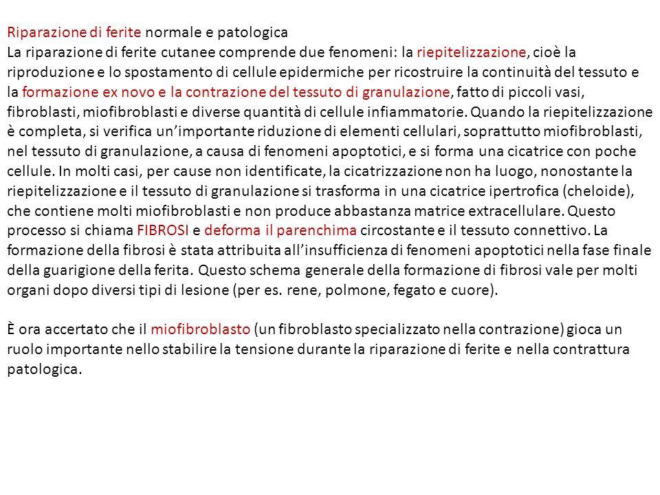 Il MIOFIBROBALSTO.