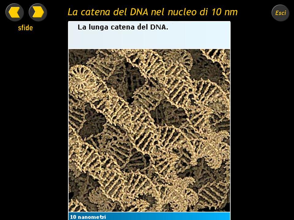 Esci La cromatina del nucleo di 100 nanometri.