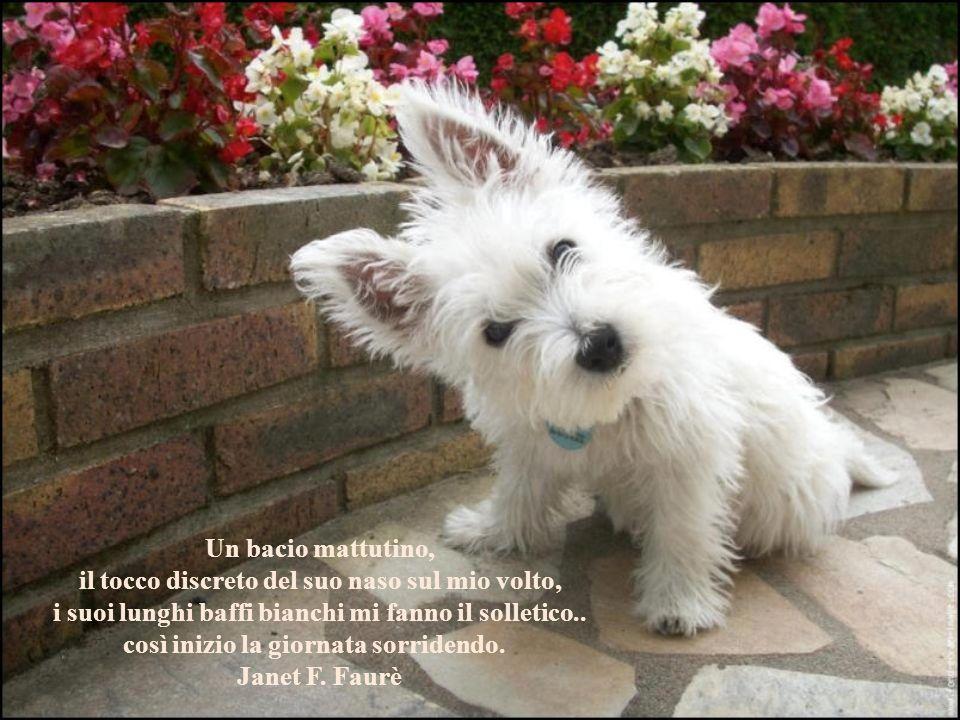 Chi è crudele verso gli animali è altrettanto insensibile verso gli uomini. Immanuel Kant