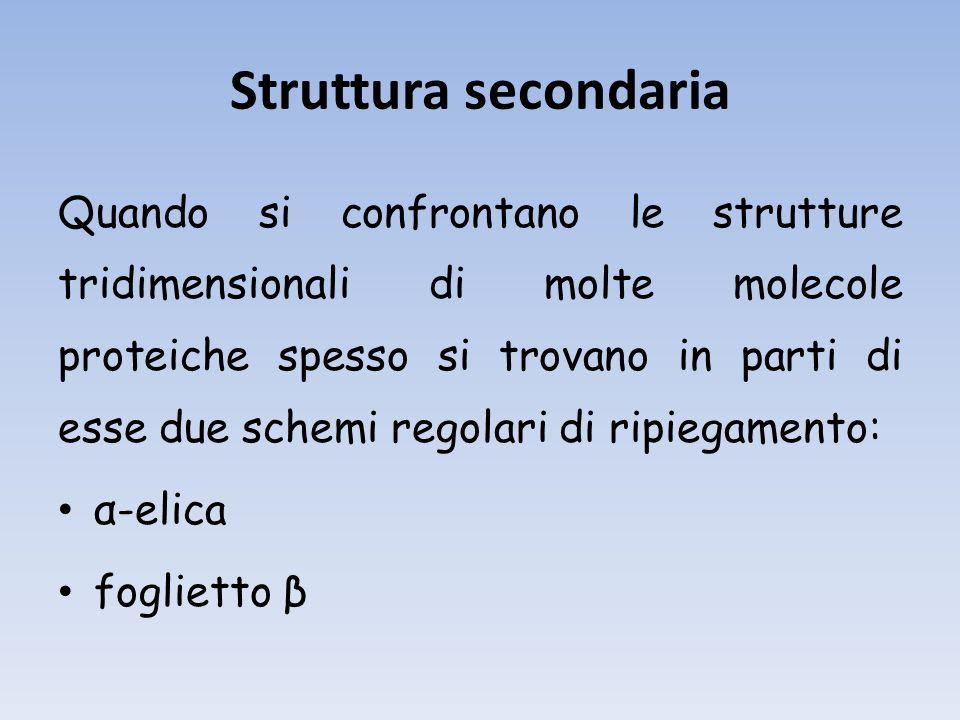 Struttura secondaria Quando si confrontano le strutture tridimensionali di molte molecole proteiche spesso si trovano in parti di esse due schemi regolari di ripiegamento: α-elica foglietto β
