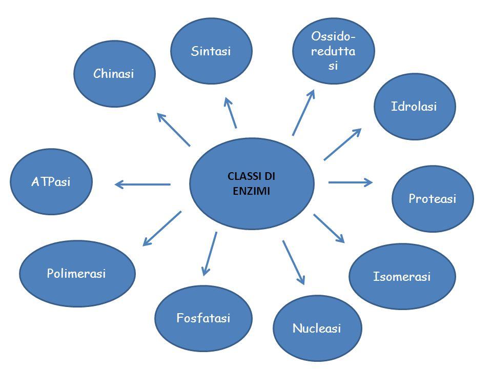 CLASSI DI ENZIMI Idrolasi Chinasi Polimerasi Isomerasi Sintasi Proteasi Nucleasi ATPasi Ossido- redutta si Fosfatasi