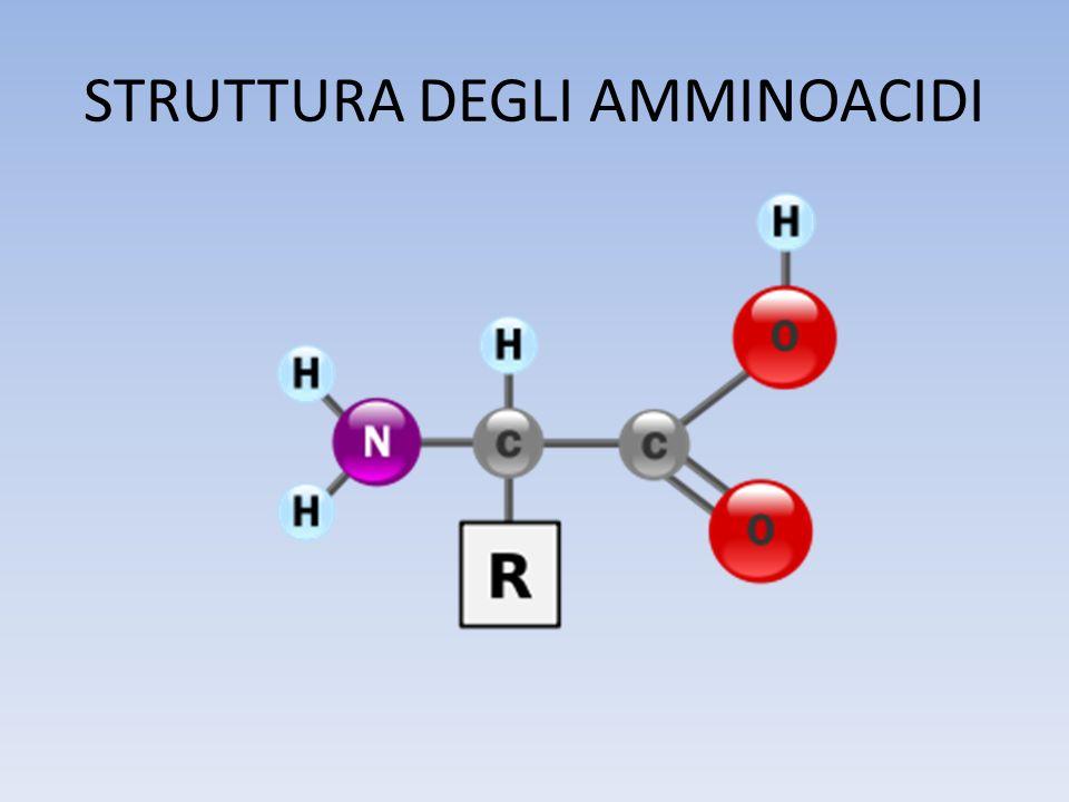 GLI AMMINOACIDI I 22 amminoacidi che prendono parte allo svolgimento delle funzioni biologiche in tutti gli organismi hanno differenti proprietà conferitegli dalla catena laterale.