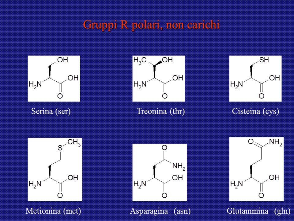 Domini proteici Un dominio è una sottostruttura prodotta da qualunque parte di una catena polipeptidica che si possa ripiegare indipendentemente in una struttura compatta stabile.