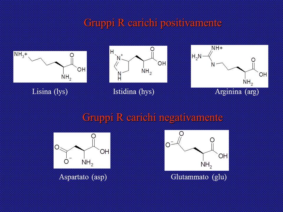 Energia libera Le proteine tendono ad assumere conformazioni tali da rendere minima lenergia libera, quindi massima la stabilità.