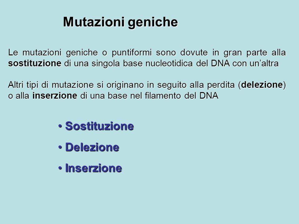 Mutazioni geniche Le mutazioni geniche o puntiformi sono dovute in gran parte alla sostituzione di una singola base nucleotidica del DNA con unaltra A