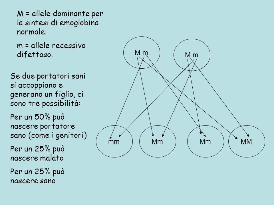 Se due portatori sani si accoppiano e generano un figlio, ci sono tre possibilità: Per un 50% può nascere portatore sano (come i genitori) Per un 25% può nascere malato Per un 25% può nascere sano M m mmMm MM M = allele dominante per la sintesi di emoglobina normale.