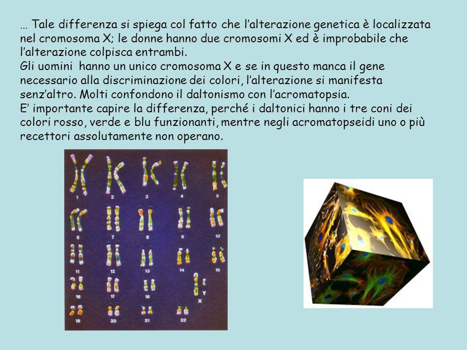 … Tale differenza si spiega col fatto che lalterazione genetica è localizzata nel cromosoma X; le donne hanno due cromosomi X ed è improbabile che lal