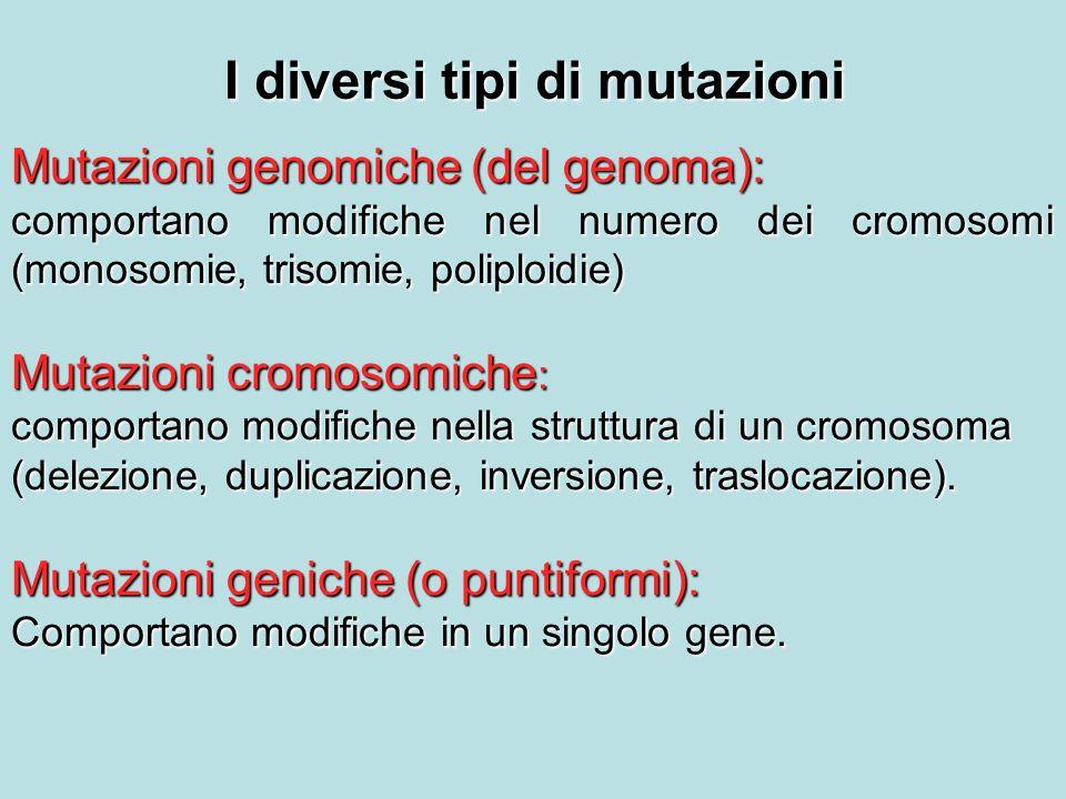I diversi tipi di mutazioni Mutazioni genomiche (del genoma): comportano modifiche nel numero dei cromosomi (monosomie, trisomie, poliploidie) Mutazioni cromosomiche : comportano modifiche nella struttura di un cromosoma (delezione, duplicazione, inversione, traslocazione).