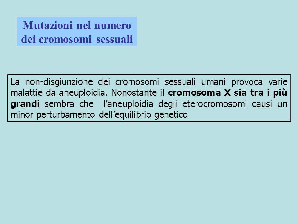 Mutazioni nel numero dei cromosomi sessuali La non-disgiunzione dei cromosomi sessuali umani provoca varie malattie da aneuploidia.