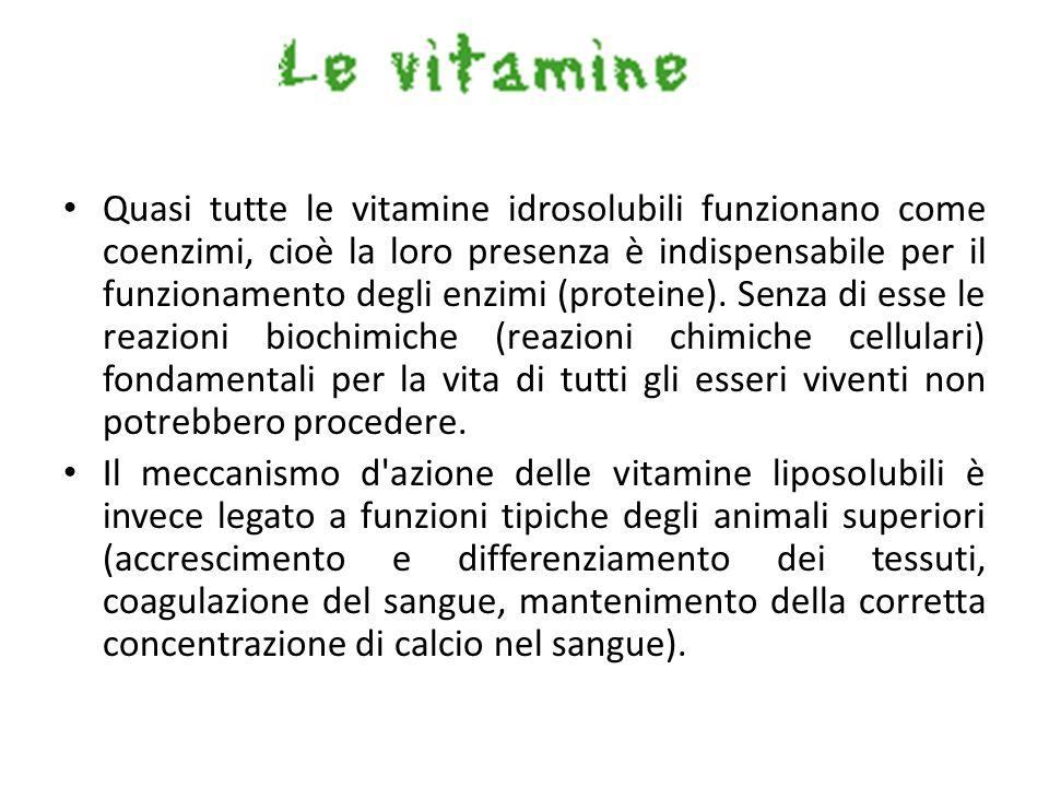 Quasi tutte le vitamine idrosolubili funzionano come coenzimi, cioè la loro presenza è indispensabile per il funzionamento degli enzimi (proteine). Se