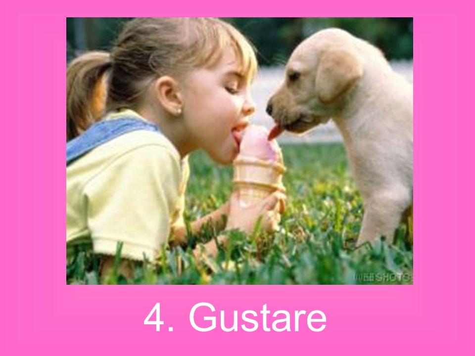 4. Gustare