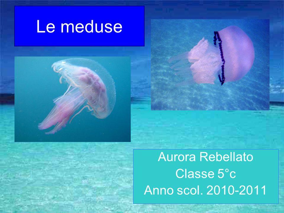 Le meduse Aurora Rebellato Classe 5°c Anno scol. 2010-2011