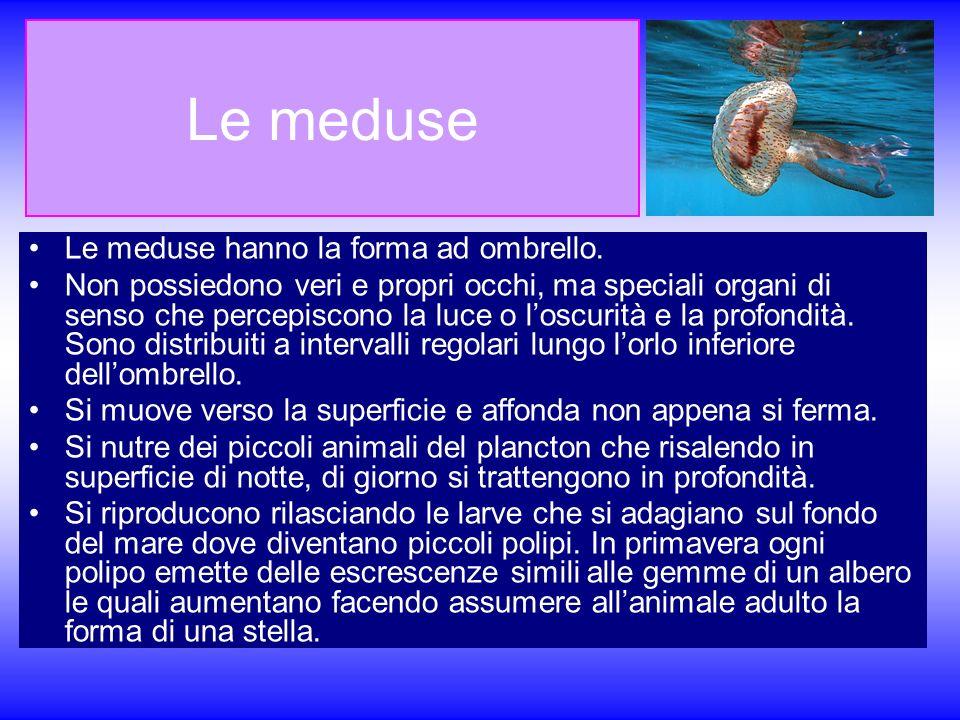 Le meduse Le meduse hanno la forma ad ombrello. Non possiedono veri e propri occhi, ma speciali organi di senso che percepiscono la luce o loscurità e