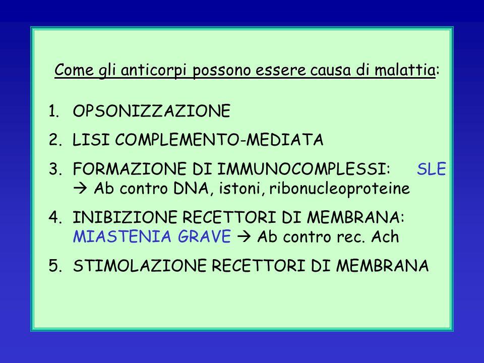 MORBO DI GRAVES o Morbo di Flajani-Basedow-Graves (ipertiroidismo, tireotossicosi) Reazioni immunopatogene di V tipo (ipersensibilità stimolatoria)