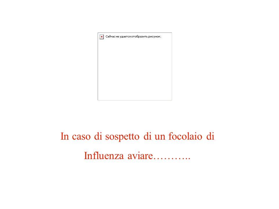 MANUALE OPERATIVO IN CASO DI INFLUENZA AVIARIA Schema del Piano di Emergenza predisposto ai sensi dellart.