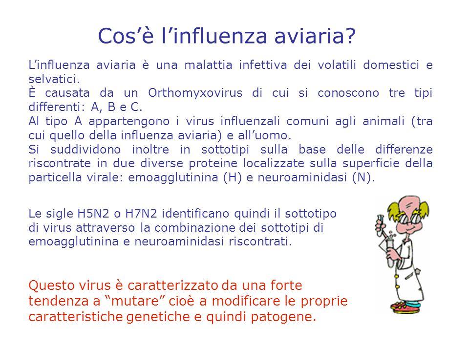Le specie che fungono da serbatoio epidemiologico, avendo la capacità di infettarsi con diversi sottotipi contemporaneamente, assicurano le condizioni necessarie per il riassortimento genetico, consentendo quindi la persistenza dei virus dellinfluenza aviaria in natura e la comparsa di nuove varianti.