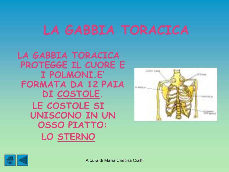 A cura di Maria Cristina Ciaffi LA GABBIA TORACICA LA GABBIA TORACICA PROTEGGE IL CUORE E I POLMONI.E FORMATA DA 12 PAIA DI COSTOLE.