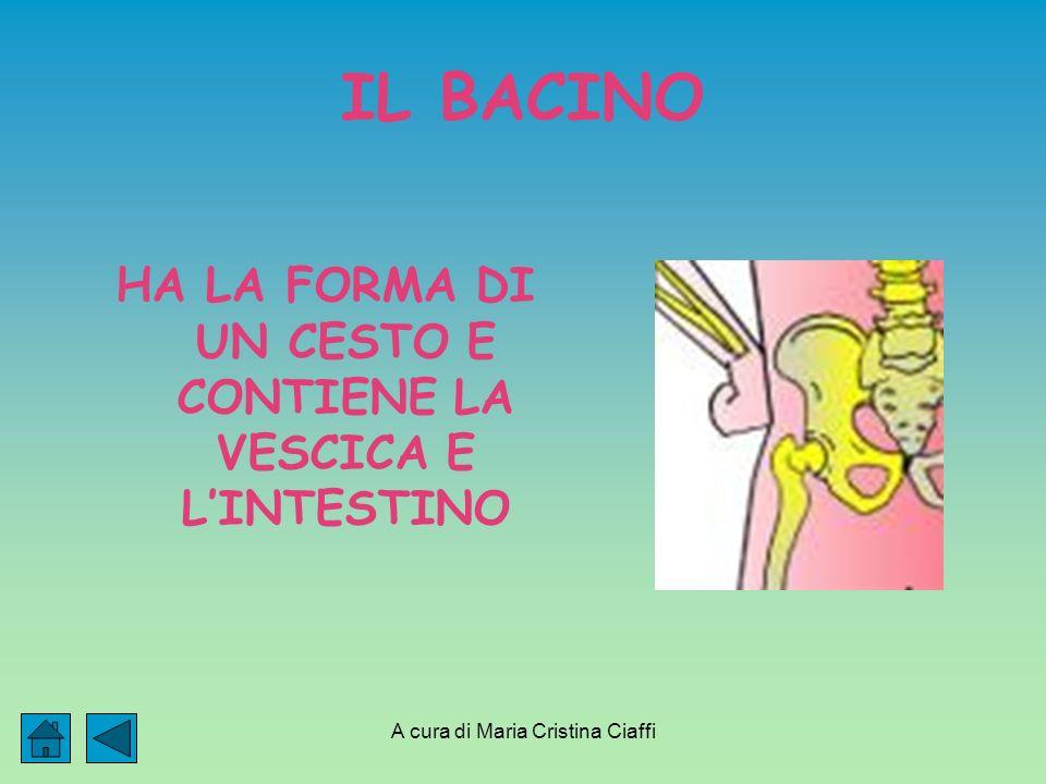 A cura di Maria Cristina Ciaffi IL BACINO HA LA FORMA DI UN CESTO E CONTIENE LA VESCICA E LINTESTINO