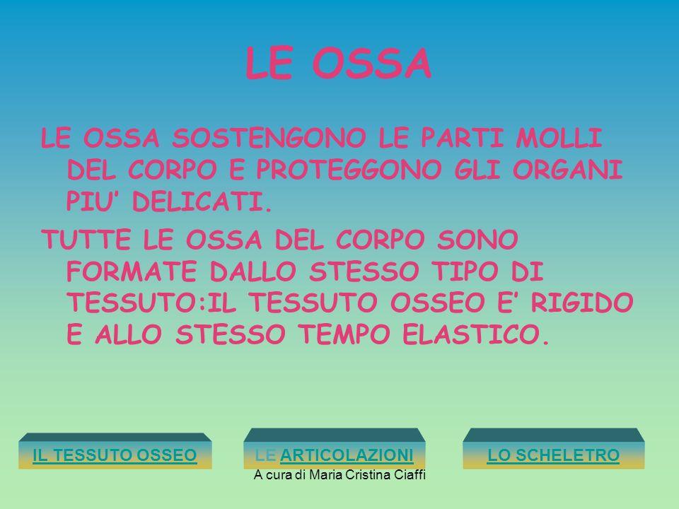A cura di Maria Cristina Ciaffi GLI ARTI SI DIVIDONO IN SUPERIORI E INFERIORI, LE BRACCIA E LE GAMBE.