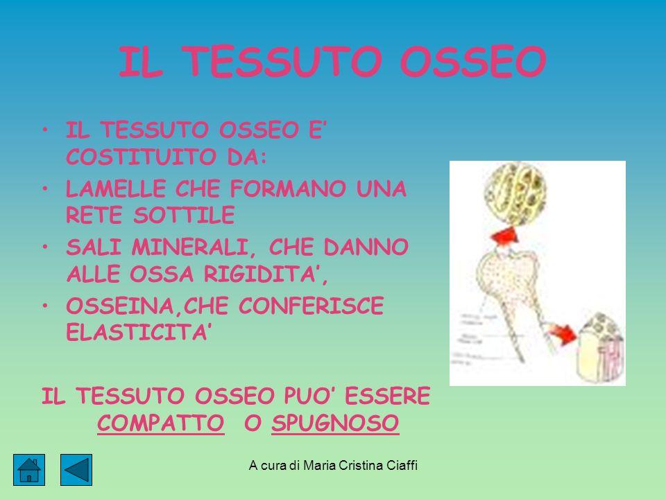 A cura di Maria Cristina Ciaffi IL TESSUTO OSSEO IL TESSUTO OSSEO E COSTITUITO DA: LAMELLE CHE FORMANO UNA RETE SOTTILE SALI MINERALI, CHE DANNO ALLE OSSA RIGIDITA, OSSEINA,CHE CONFERISCE ELASTICITA IL TESSUTO OSSEO PUO ESSERE COMPATTO O SPUGNOSO