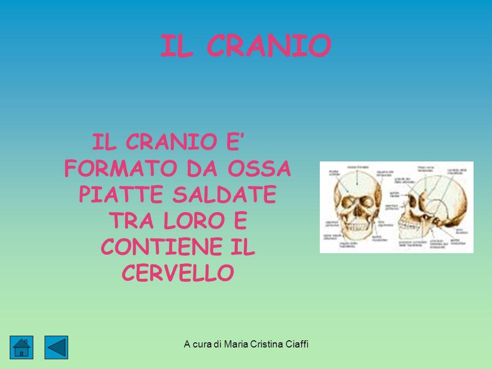 A cura di Maria Cristina Ciaffi IL CRANIO IL CRANIO E FORMATO DA OSSA PIATTE SALDATE TRA LORO E CONTIENE IL CERVELLO