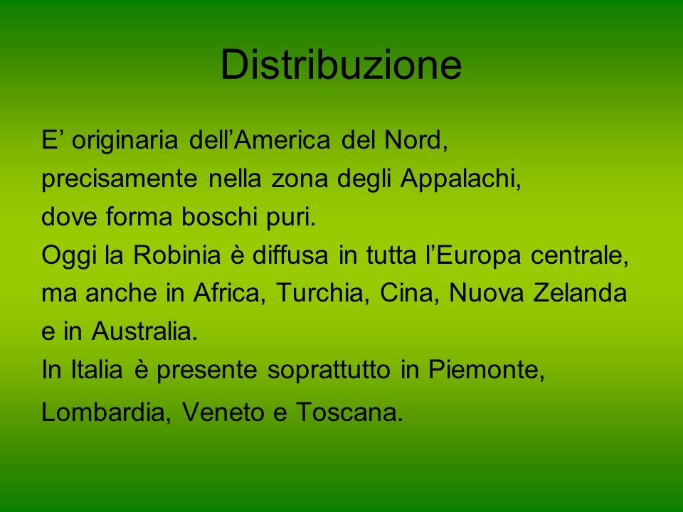 Distribuzione E originaria dellAmerica del Nord, precisamente nella zona degli Appalachi, dove forma boschi puri. Oggi la Robinia è diffusa in tutta l