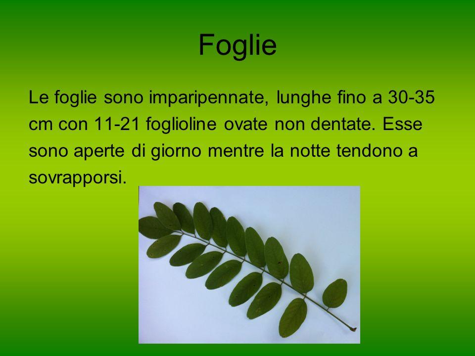 Foglie Le foglie sono imparipennate, lunghe fino a 30-35 cm con 11-21 foglioline ovate non dentate. Esse sono aperte di giorno mentre la notte tendono
