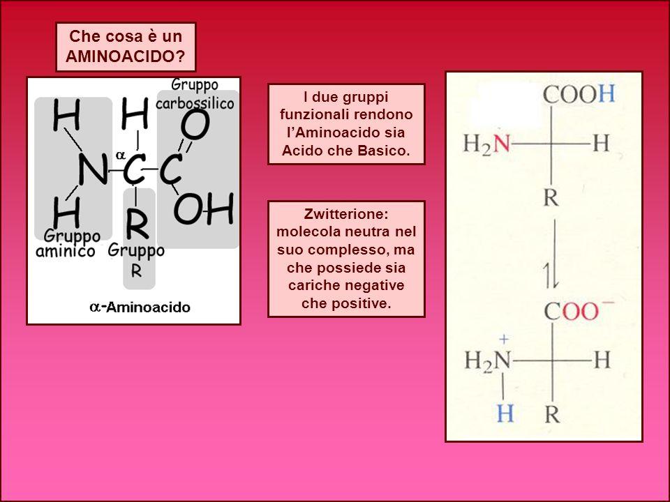 Che cosa è un AMINOACIDO? I due gruppi funzionali rendono lAminoacido sia Acido che Basico. Zwitterione: molecola neutra nel suo complesso, ma che pos