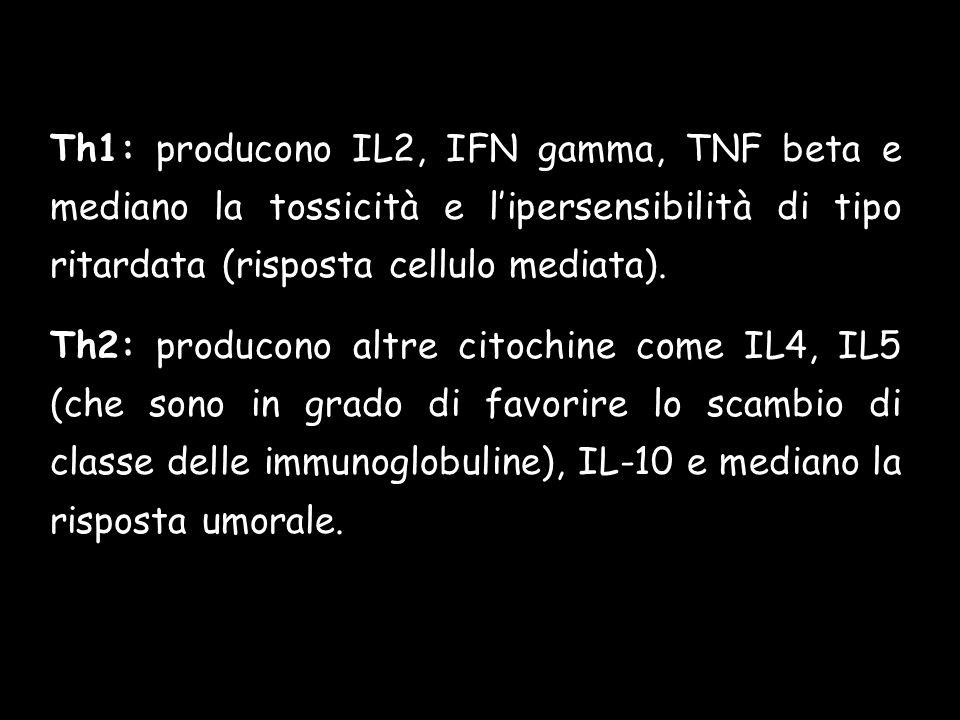 Th1: producono IL2, IFN gamma, TNF beta e mediano la tossicità e lipersensibilità di tipo ritardata (risposta cellulo mediata).