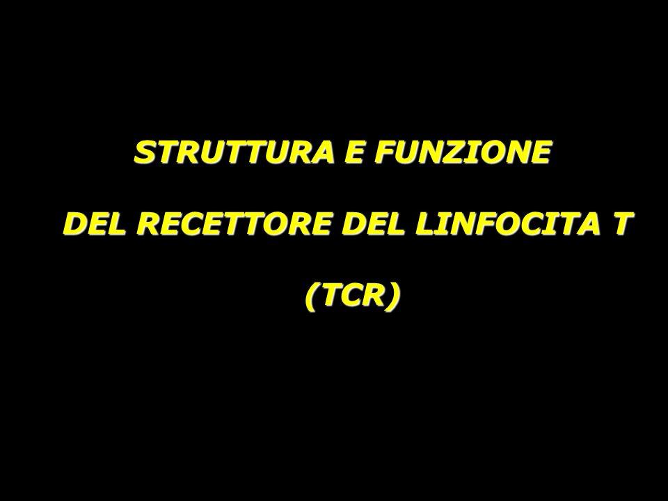 STRUTTURA E FUNZIONE DEL RECETTORE DEL LINFOCITA T (TCR) (TCR)