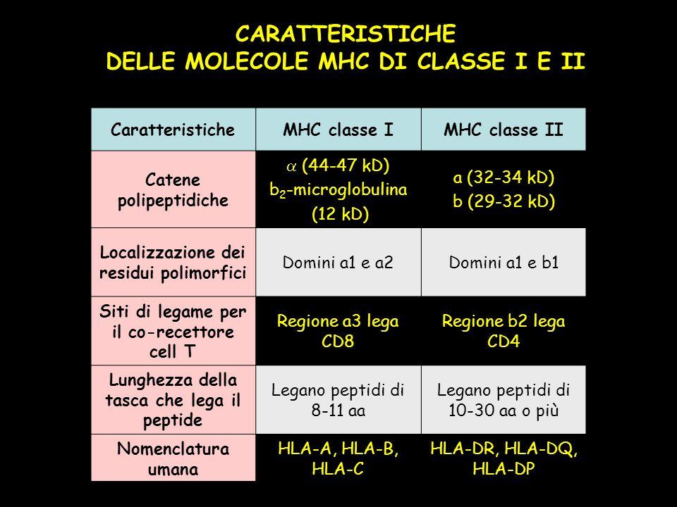 CaratteristicheMHC classe IMHC classe II Catene polipeptidiche (44-47 kD) b 2 -microglobulina (12 kD) a (32-34 kD) b (29-32 kD) Localizzazione dei residui polimorfici Domini a1 e a2Domini a1 e b1 Siti di legame per il co-recettore cell T Regione a3 lega CD8 Regione b2 lega CD4 Lunghezza della tasca che lega il peptide Legano peptidi di 8-11 aa Legano peptidi di 10-30 aa o più Nomenclatura umana HLA-A, HLA-B, HLA-C HLA-DR, HLA-DQ, HLA-DP CARATTERISTICHE DELLE MOLECOLE MHC DI CLASSE I E II