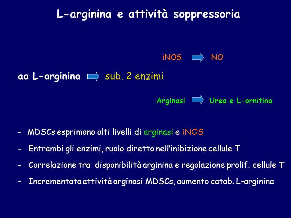 iNOS NO aa L-arginina sub. 2 enzimi Arginasi Urea e L-ornitina - MDSCs esprimono alti livelli di arginasi e iNOS - Entrambi gli enzimi, ruolo diretto