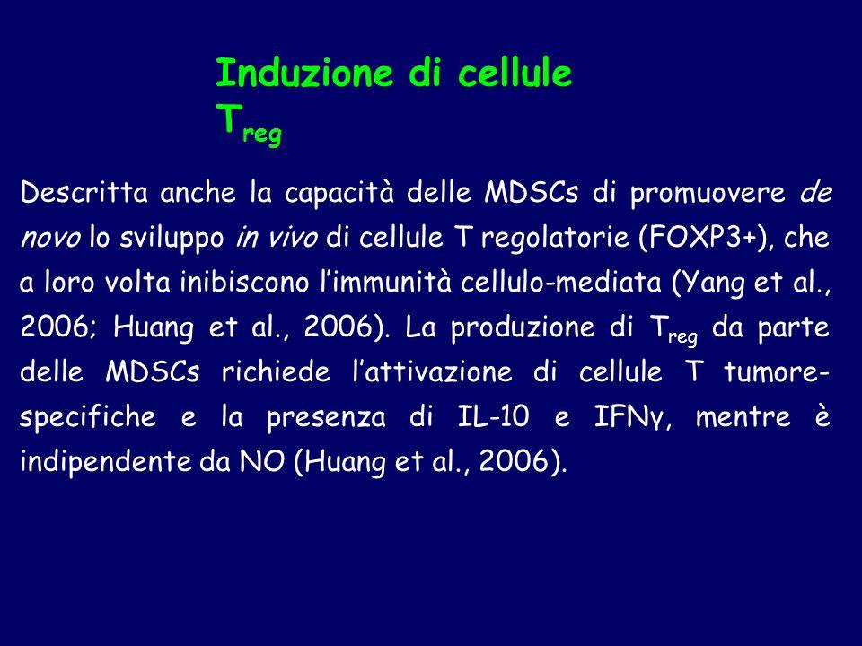 Descritta anche la capacità delle MDSCs di promuovere de novo lo sviluppo in vivo di cellule T regolatorie (FOXP3+), che a loro volta inibiscono limmu