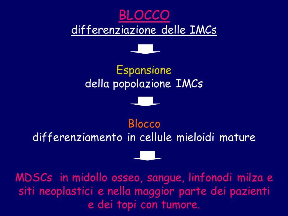 BLOCCO differenziazione delle IMCs Espansione della popolazione IMCs Blocco differenziamento in cellule mieloidi mature MDSCs in midollo osseo, sangue